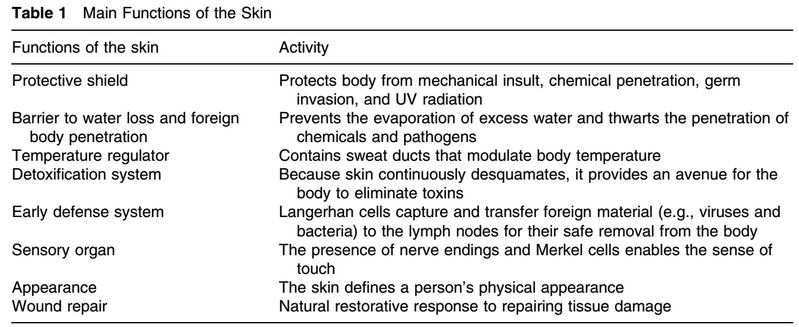 A Quick Overview Of Skin Anatomy And Physiology Pamper Urself Green